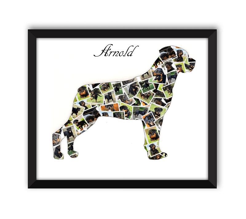 Rottweiler Black Frame