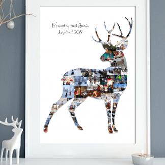 Reindeer Stag Lapland